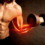 プロテインが筋肉になるメカニズム