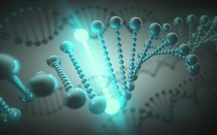 筋肉がつきにくい「筋トレ効果」がでない遺伝子とは?